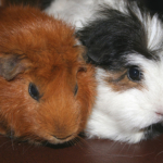 We are people, not guinea pigs