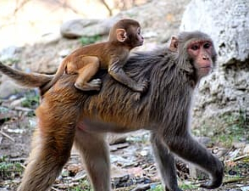 When Being a Primate Makes Parenting So Much Harder